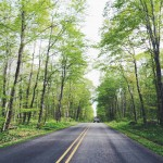 road-summer-forest-green